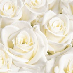 Biele luxusné obrúsky Dreams 12ks